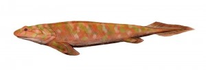 Panderichythys is no longer an important transition but an evolutionary dead-end.