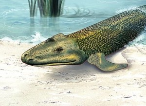 Artists rendition of Tiktaalik