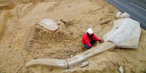 Excavating whale fossils from Chilean desert