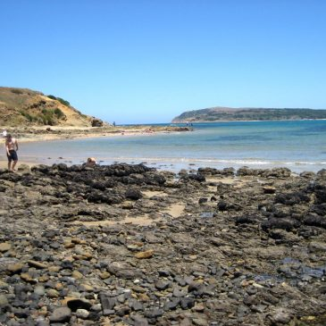 Phillip Island Excursion Site 13: Bonwicks Beach, San Remo