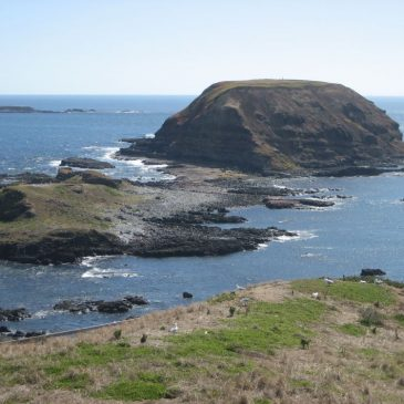 Phillip Island Excursion Site1: The Nobbies