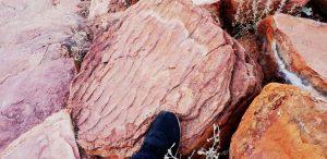 Fossil ripples on sandstone layer at Kellys Knob, Kununurra