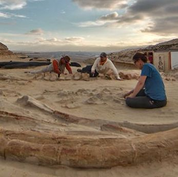 Whales buried in desert graveyard in Chile as waters of Noah's Flood receded