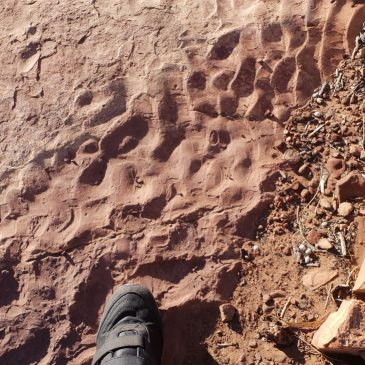 What do the fossilized ripples preserved on sandstone layers on Kellys Knob, Kununurra, mean?